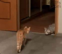 Funny Cat GIF - Find & Share on GIPHY