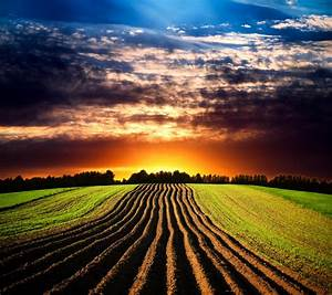 Beautiful, Agricultural, Fields, Picture