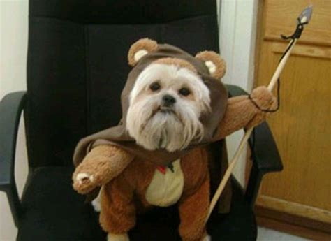 It's Star Wars Day, and all you need is dogs dressed up as ...