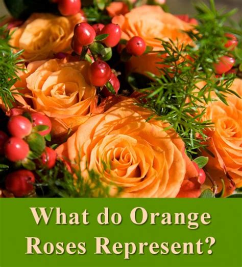 what does the color orange stand for all the different colors of roses and their meanings
