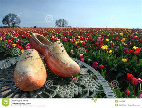 tulip flower garden free stock wooden shoes and tulip flower garden royalty free stock image image 9402726