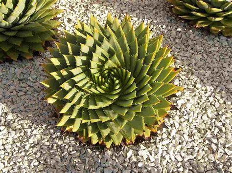 plantes grasses ext 233 rieur conseils d entretien et id 233 es d 233 co