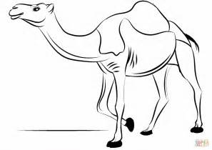 dromedary camel coloring page  printable coloring pages