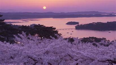 Cherry Japan Blossoms Blossom Japanese Tree Wallpapers