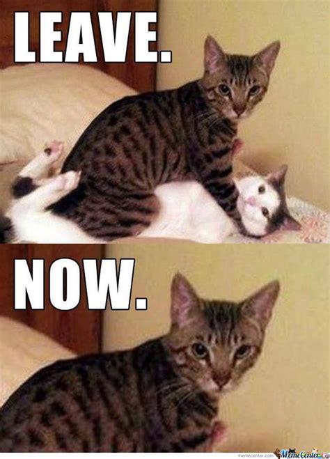 Bad Kitty Meme - bad kitty by rainbowbatch meme center