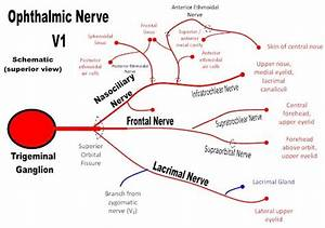 Ophthalmic Nerve  V1  Of The Trigeminal Nerve And Its