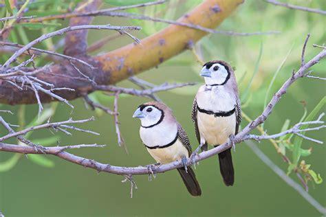 australian wildlife animal  bird photography