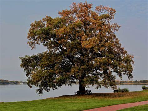 Pflanzen Im Oktober by Mein Freund Der Baum Im Oktober Foto Bild Pflanzen