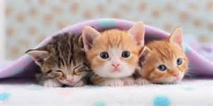 tiny cats cats that stay small tiny kittens for your tiny home