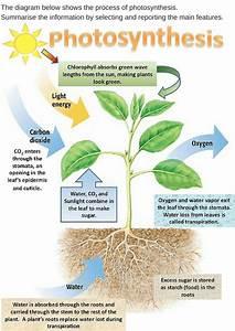 Uses of plants essay