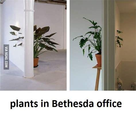 plants  bethesdas office gag
