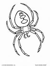 Coloring Pages Tick Bug Virus Template Spider Orkin Templates Friend sketch template