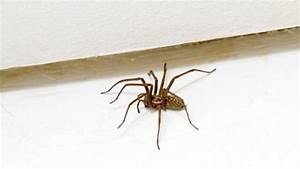 Se Débarrasser Des Araignées : lutter contre les araign es et s 39 en d barrasser ~ Louise-bijoux.com Idées de Décoration