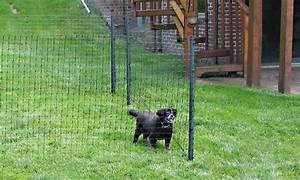 Easy fencing for dogs peiranos fences versatile for Dog fence for sale cheap