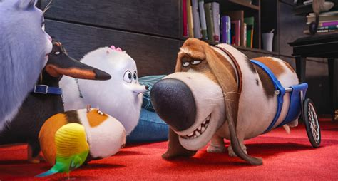 Suggest an update the secret life of pets. The Secret Life of Pets Giveaway- Upstate Ramblings