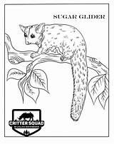 Crittersquad sketch template