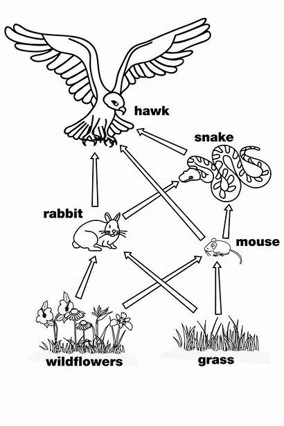 Web Simple Science Diagram Grade Chain Pages