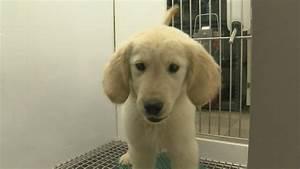 Fido Pet Shop : las vegas pet shop rules imposed bringing changes when you buy fido ksnv ~ Markanthonyermac.com Haus und Dekorationen