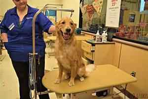 Petsmart grooming review looking sharp feeling good for Petsmart dog grooming