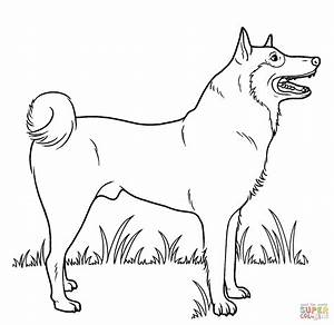 Husky Dog Coloring Pages - Bestofcoloring.com
