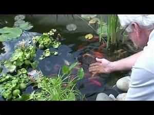 Goldfische Im Teich : goldfische im teich 1 youtube ~ Eleganceandgraceweddings.com Haus und Dekorationen