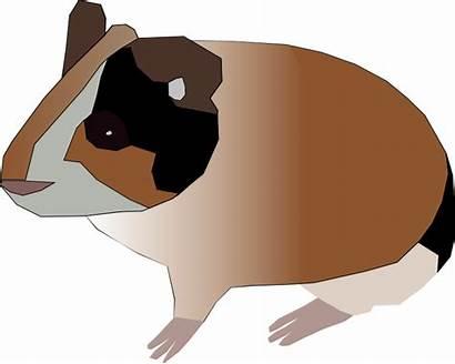 Guinea Pig Pets
