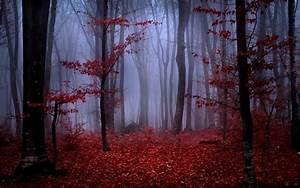 Red Autumn Foliage In Foggy Forest Wallpaper 17292