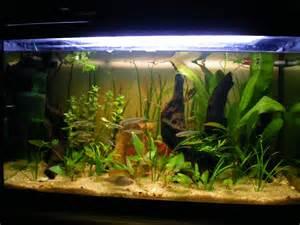 aquarium eau froide