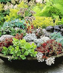Winterharte Blumen Für Kübel : winterharte sedum mischung pflanzen winterharte pflanzen und garten pflanzen ~ A.2002-acura-tl-radio.info Haus und Dekorationen