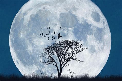 When Is The Next Full Moon? March's Worm Moon Explained