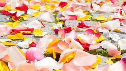 Rose Petals Wallpapers