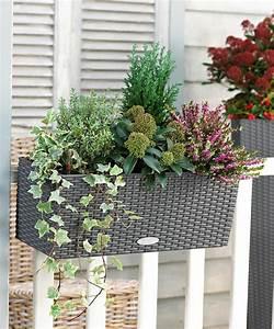 Plantes D Hiver Extérieur Balcon : choisir une plante pour jardini re quelques id es et ~ Nature-et-papiers.com Idées de Décoration