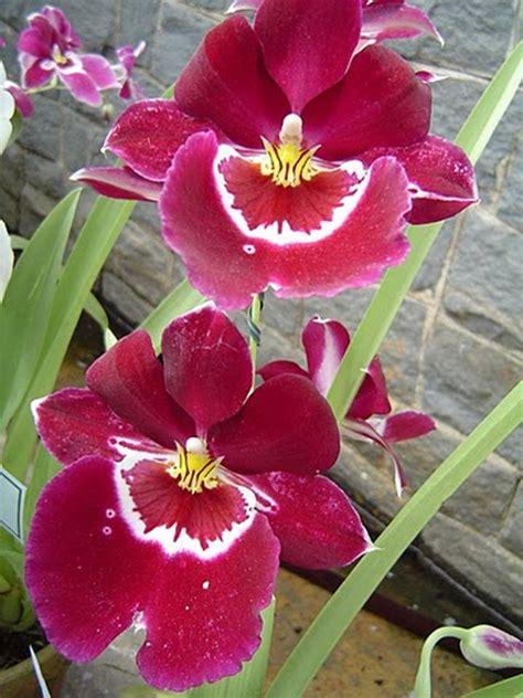 Wonderful flower's 4 my Xcitefun Members - XciteFun.net
