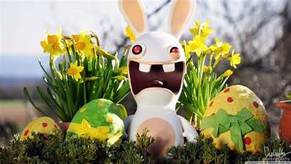Easter Bunny Funny Wallpapers
