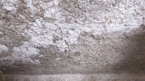 white mold growth   home  solutions
