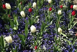 Les Fleurs Paris : les fleurs de printemps au jardin ~ Voncanada.com Idées de Décoration