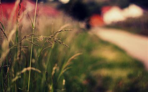 close  plant green ears spikes grass nature blur bokeh