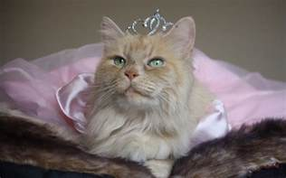 princess cat princess crown cat humor wallpaper 1920x1200