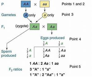 Primer of Mendelian Genetics