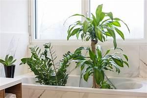 Zimmerpflanzen Im Urlaub Bewässern : blumen bew ssern im urlaub so bleiben pflanzen trotz verreisen frisch ~ Eleganceandgraceweddings.com Haus und Dekorationen