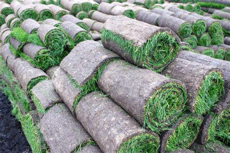 rollrasen günstig bestellen rollrasen kaufen ab 1 89 m 178 g 252 nstige lieferung