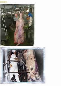 Cattle   Cow Half Carcass Splitting Saw Band Type Splitting