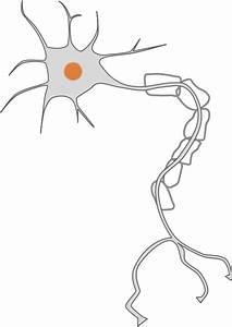 Free Neuron Cliparts  Download Free Clip Art  Free Clip