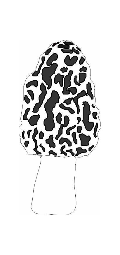 Mushroom Morel Clip Clipart Vector Svg Drawing
