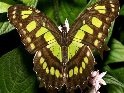 images beautiful butterflies butterfly wallpaper