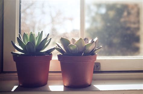 Window Potted Plants 11 surprisingly cool ways to dress up potted plants