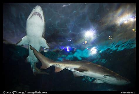 Picture Photo Shark Tunnel Seaworld San Diego