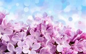 Bilder Blumen Kostenlos Downloaden : download bilder f r das handy pflanzen blumen hintergrund kostenlos 18735 ~ Frokenaadalensverden.com Haus und Dekorationen