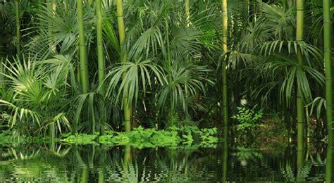 jeux de cuisine jungle bambou entretien arrossage et rempotage