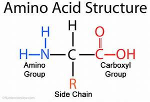 6 2 2  A  Reactions Of Amino Acids